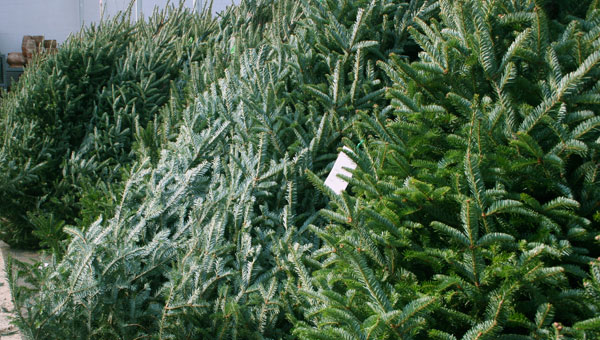 Christmas tree lots are open