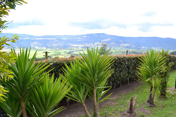 Adult Impact Trip - Bogota
